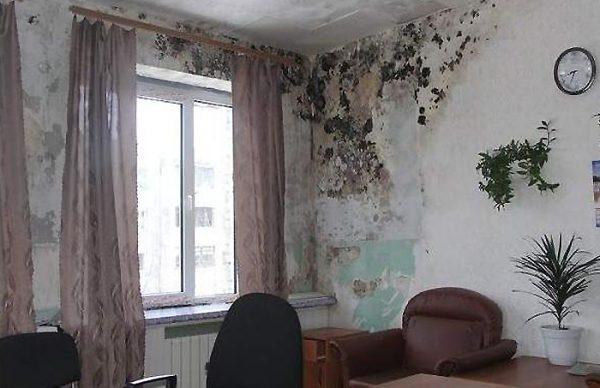 La moisissure apparaît généralement sur les murs en raison de l'humidité élevée