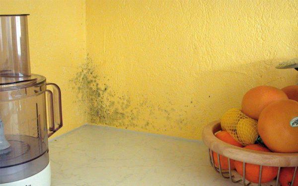 Souvent, la moisissure peut être confondue avec de la saleté ordinaire.