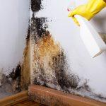 Traitement des murs contre la moisissure