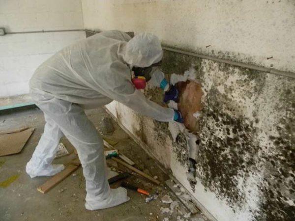 Pour se débarrasser de la moisissure sur les murs, il faut souvent enlever les matériaux de finition