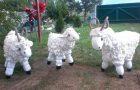 Chèvres en mousse
